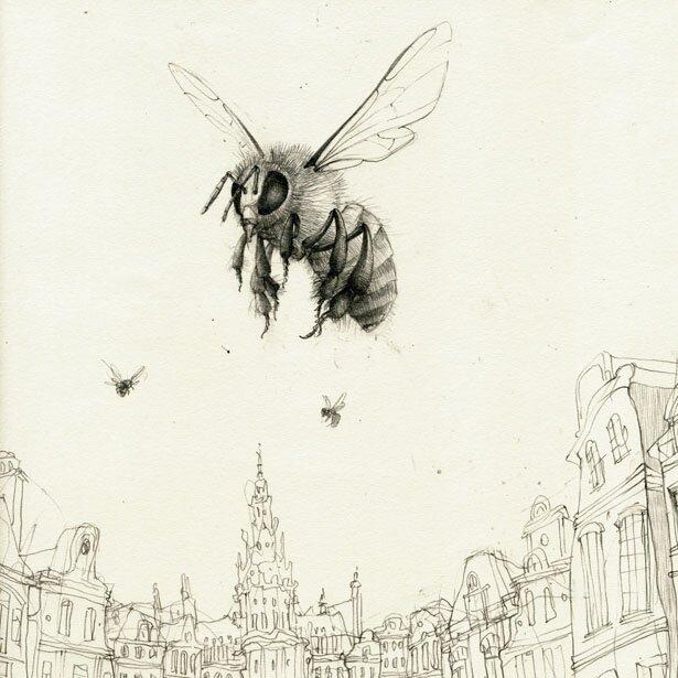 Scientific illustration honey bee